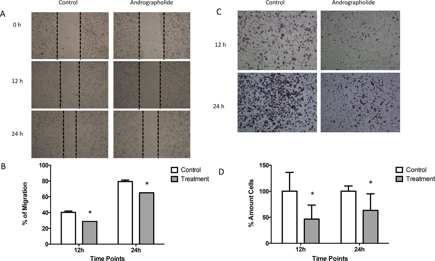 Andrographolide decreased PC3 cell migration and invasion.