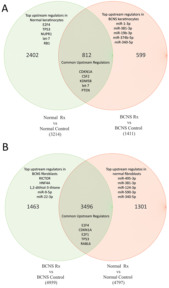 Venn diagrams of genes commonly altered in both normal and BCNS group, with or without rapamycin treatment.