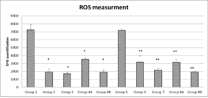 Quantification of ROS formation in the different diabetic and non-diabetic groups.