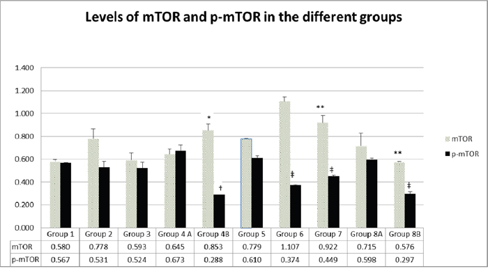 Expression of mTOR and p-mTOR at protein level in the different groups.