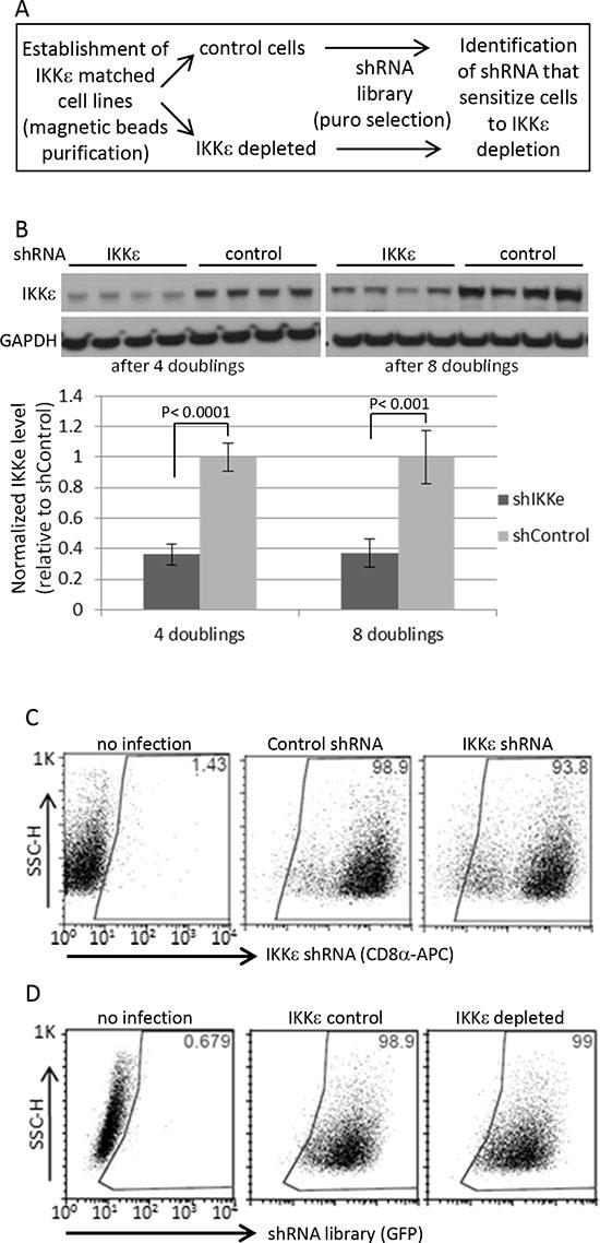 Human kinome shRNA screening.