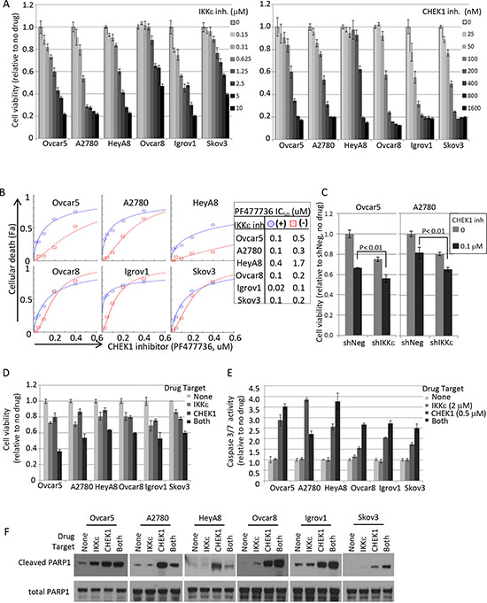 Pharmacological intervention of IKKε and CHEK1 in ovarian cancer cell lines.