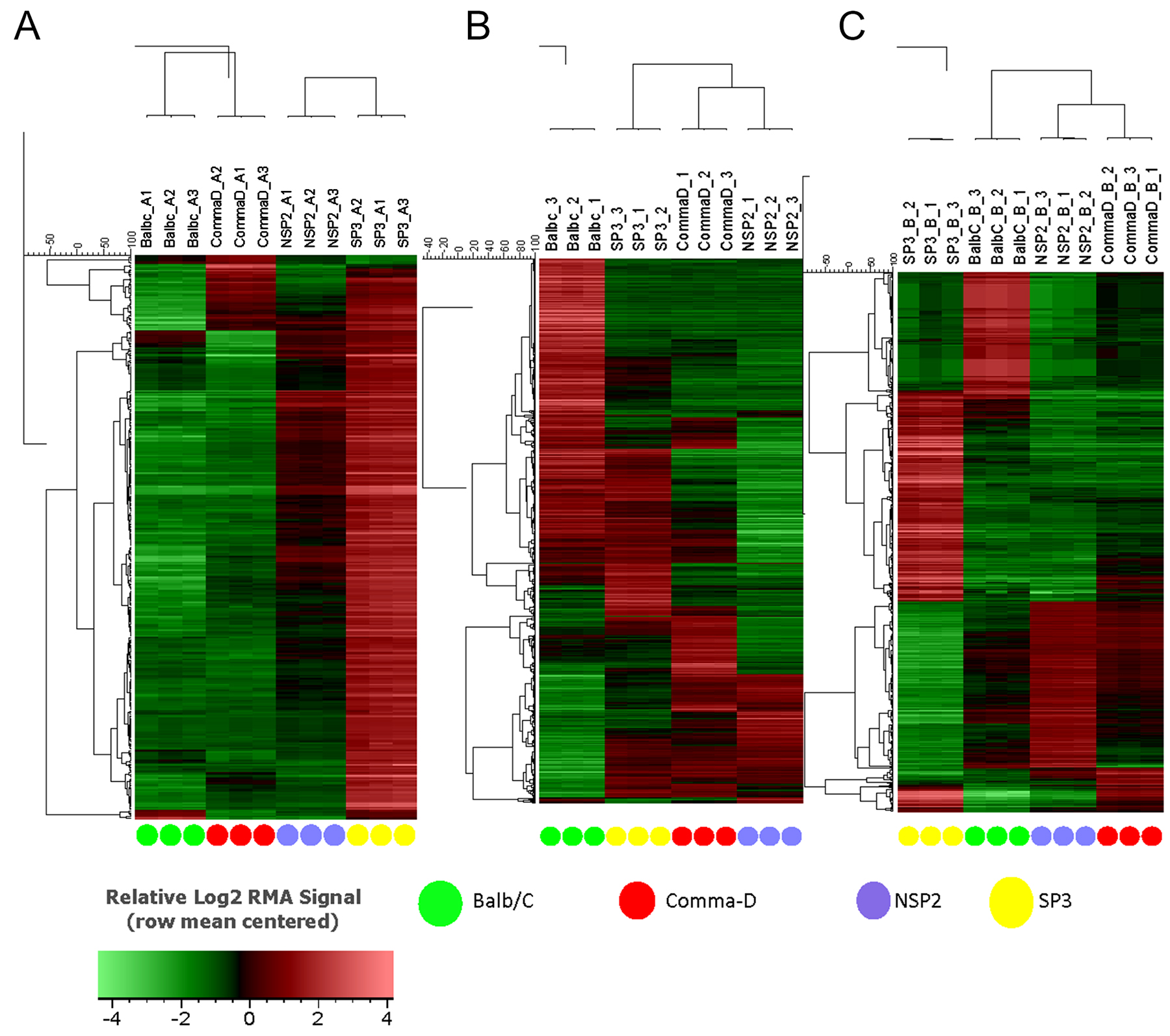 Hierarchical clustering of Balb/C, Comma-Dβ, NSP2, and SP3 cell line transcriptomes.