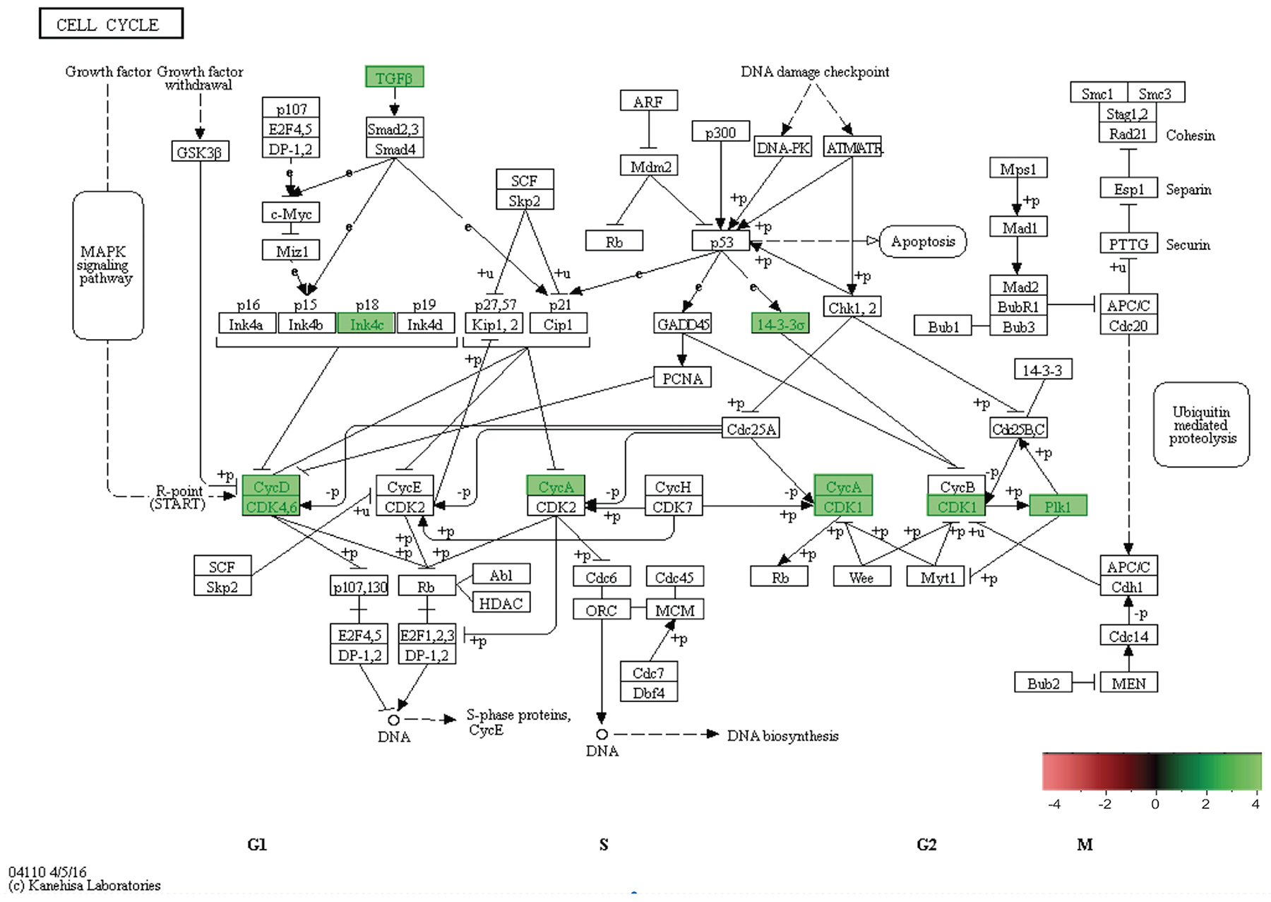 In-vivo 5-week KEGG pathway analysis.