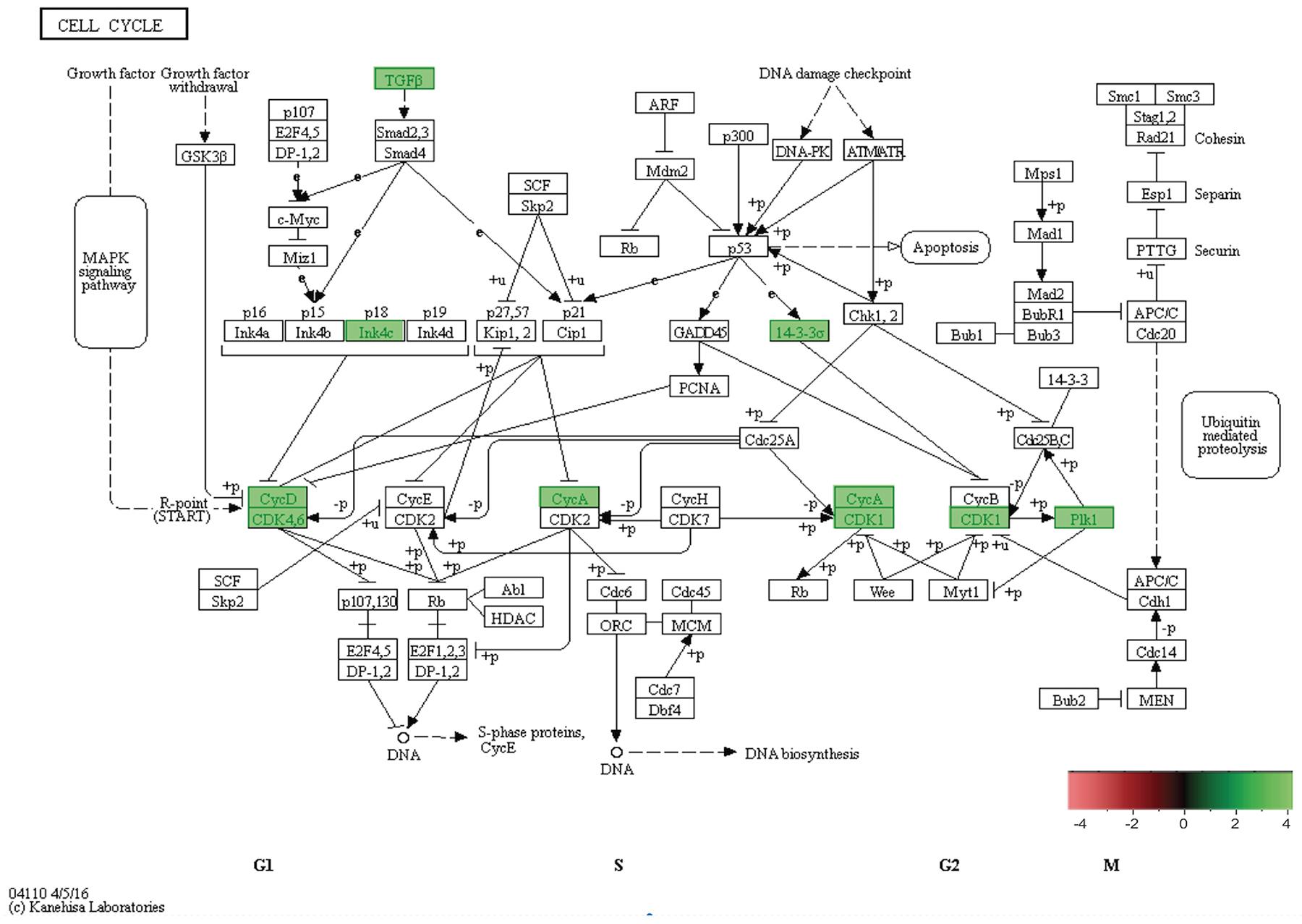 In-vivo 5-week KEGG pathway analysis.