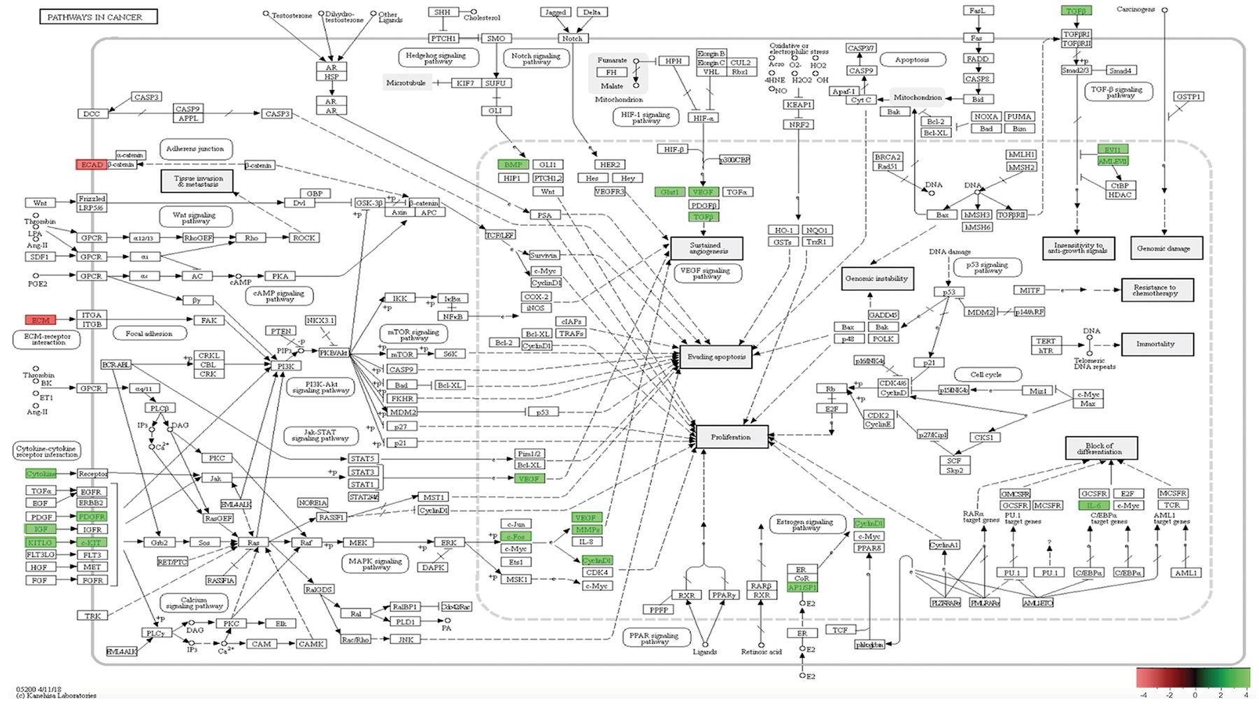 In-vivo 12-week KEGG pathway analysis.