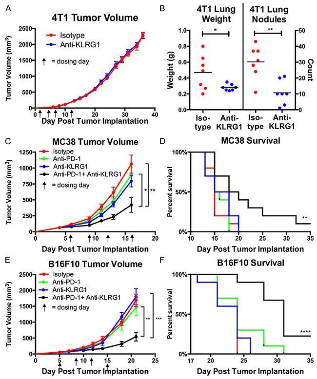 In vivo murine efficacy of anti-KLRG1 antibody.