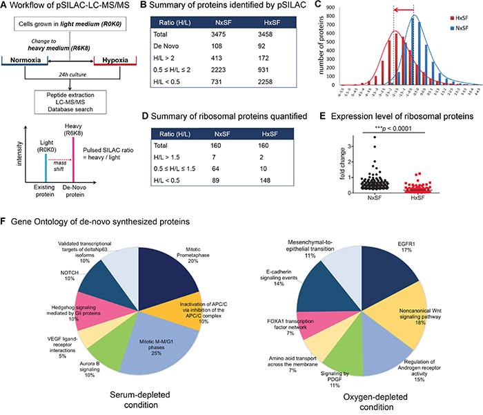 Quantitative pSILAC based proteomic analysis of A431 cells.