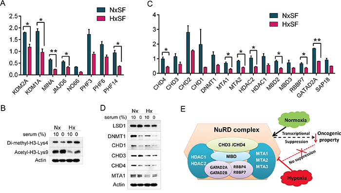 Availability of oxygen and nutrients modulates expression of epigenetic regulators in cancer cells.