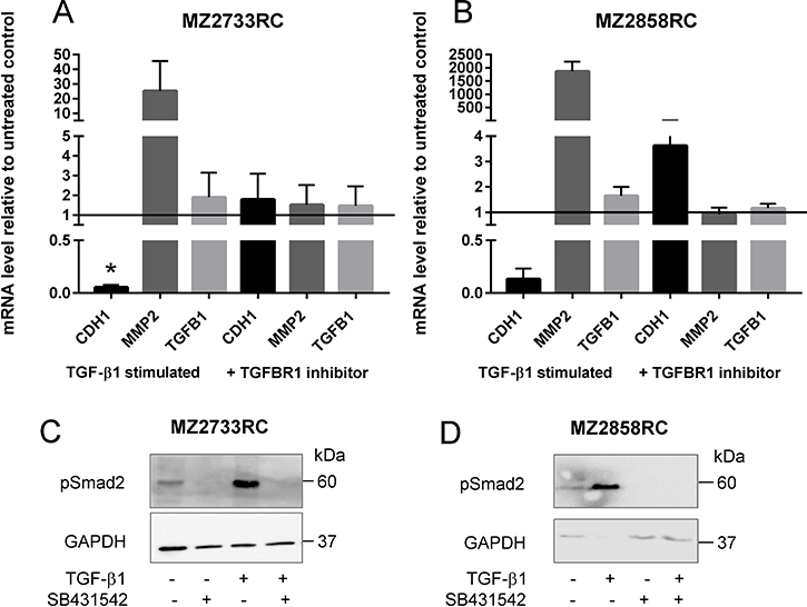 Inhibition of the TGF-β/Smad signaling pathway in RCCs.