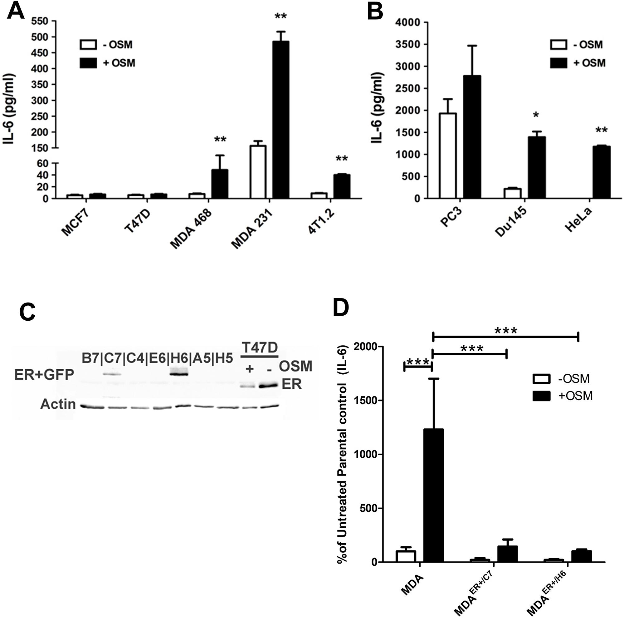 OSM induces IL-6 secretion in an ER-dependent manner.