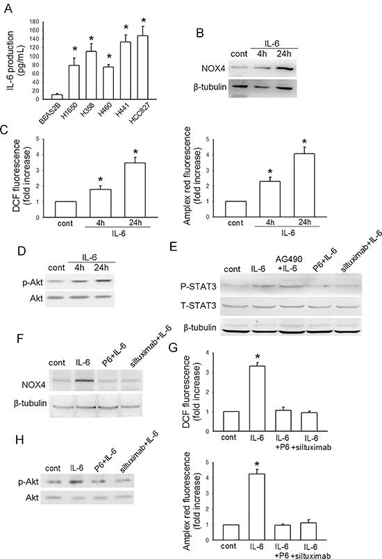 IL-6 stimulates NOX4/Akt pathway in A549 cells.