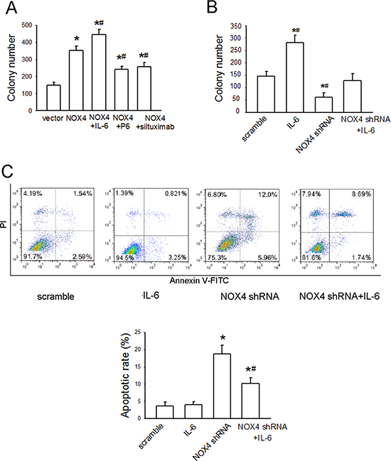 NOX4 interplays with IL-6 to regulate A549 cell proliferation and survival in vitro.
