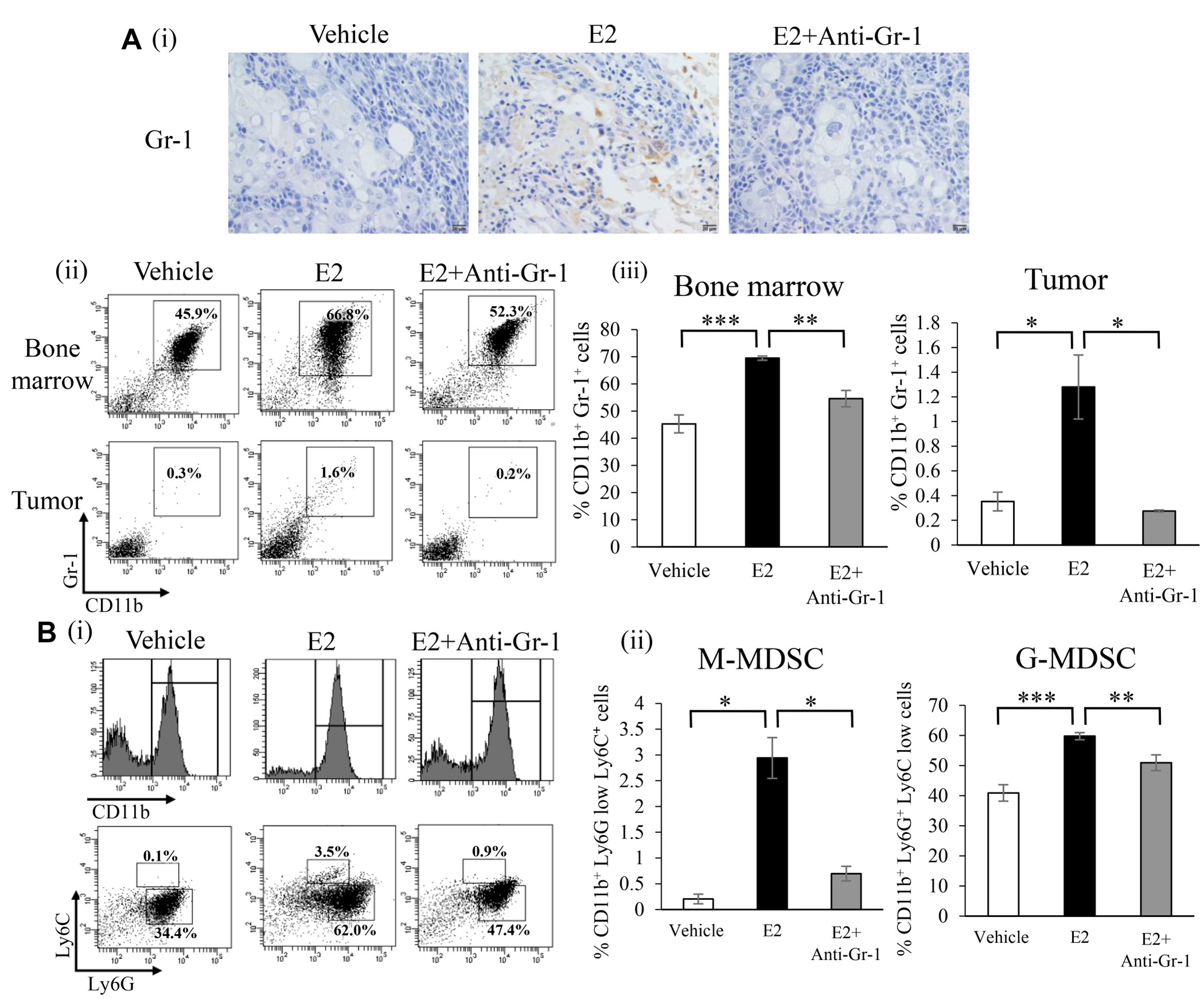 Effects of an exogenous E2 treatment on the induction of MDSC in vivo.