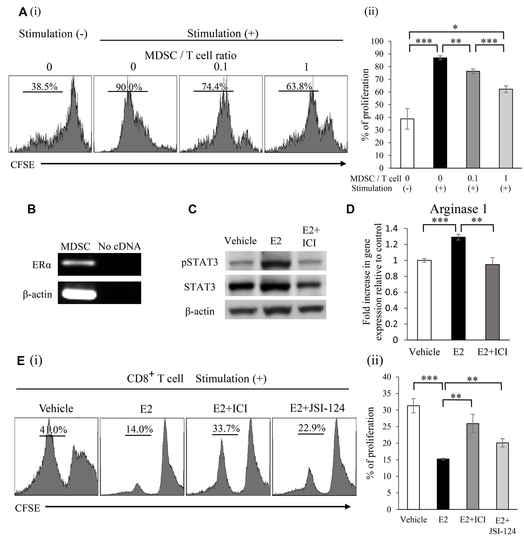 Mechanisms by which E2 stimulates the progression of female cancers.