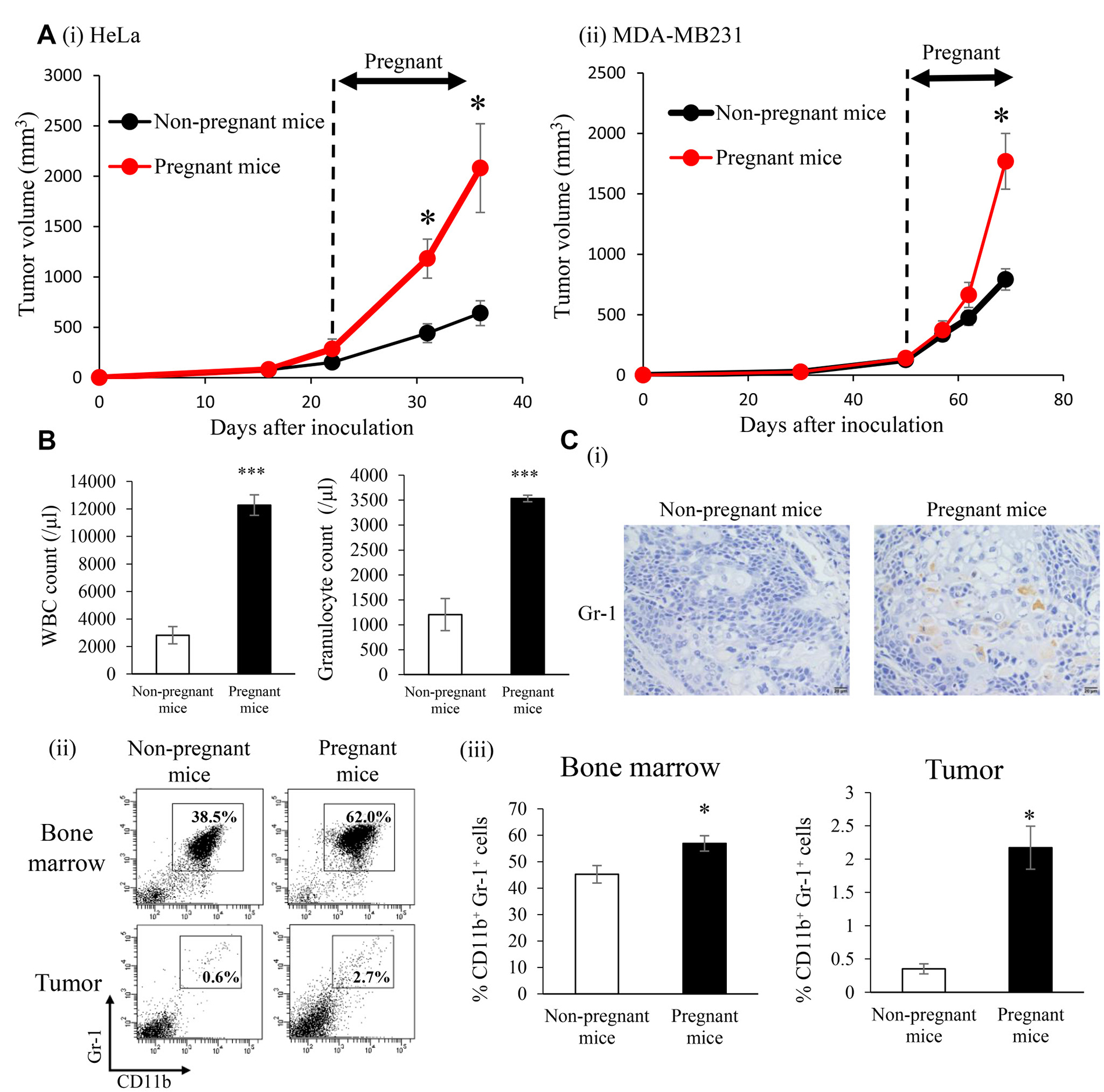 Effects of increased endogenous E2 levels during pregnancy on the recruitment of MDSC and progression of ERα-negative cervical/breast cancers in vivo.