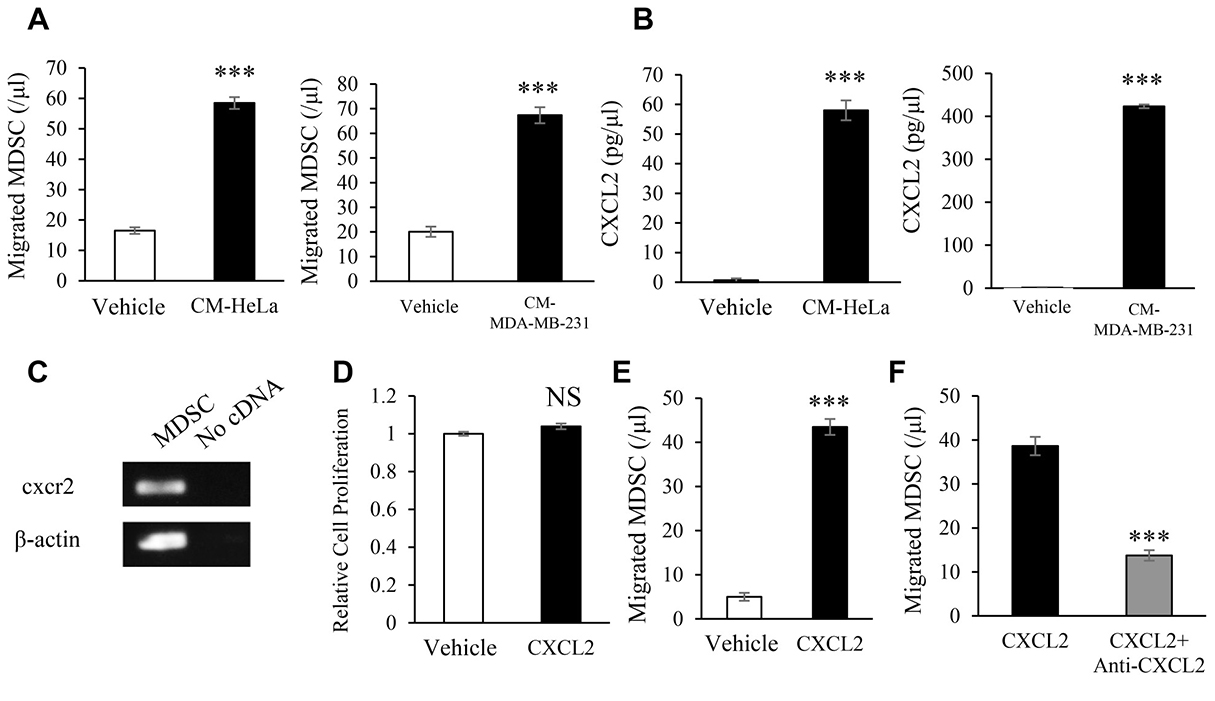 Mechanisms by which female cancers stimulate the induction of MDSC.
