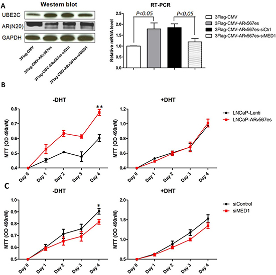 ARv567es increased UBE2C expression and improved prostate cancer cell proliferation, which was blocked by MED1 silencing.