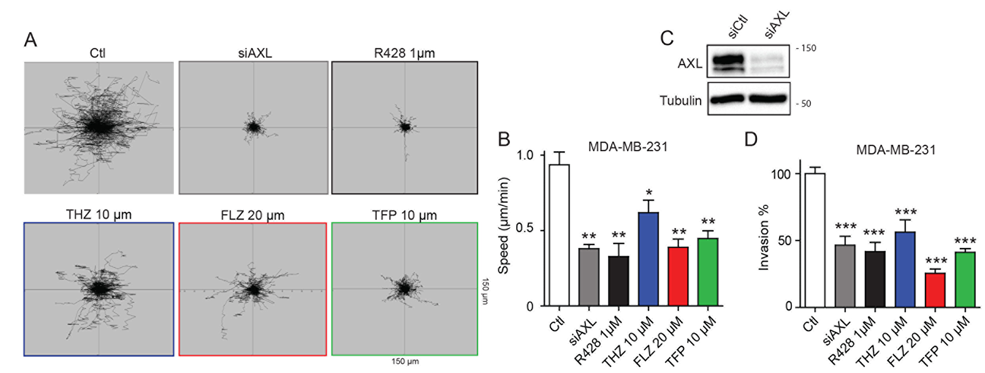 Treatments with THZ, FLZ and TFP reduces the migration potential of TNBC cells.