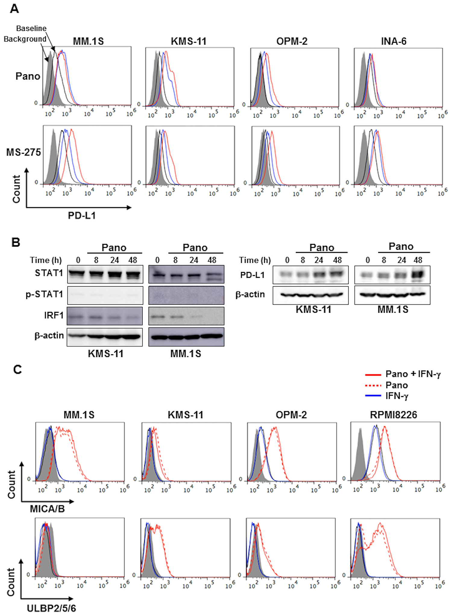 HDAC inhibition upregulates PD-L1 expression in MM cells without activating the STAT1-IRF1 pathway.