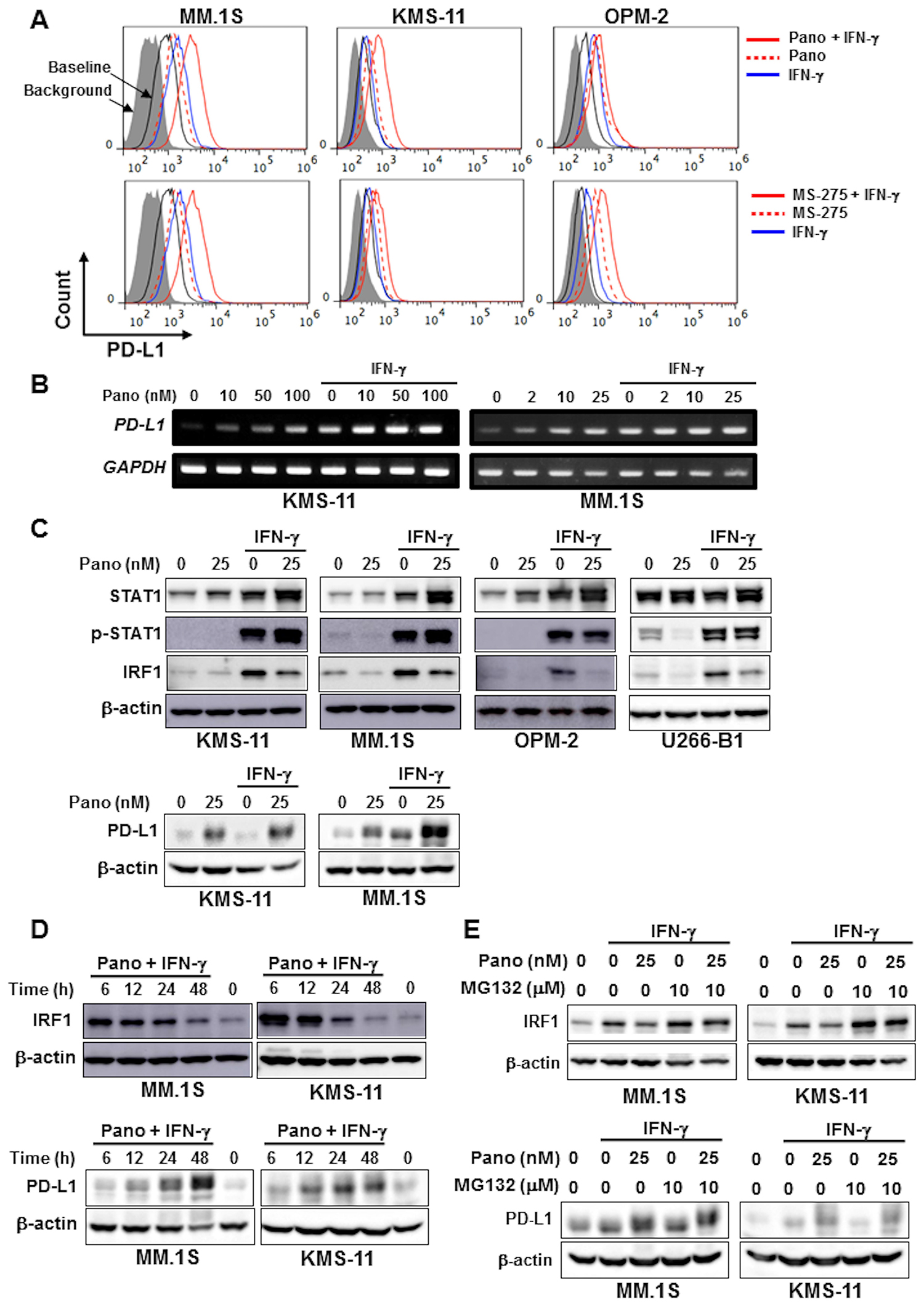 HDAC inhibition upregulates PD-L1 expression by MM cells in combination with IFN-γ.