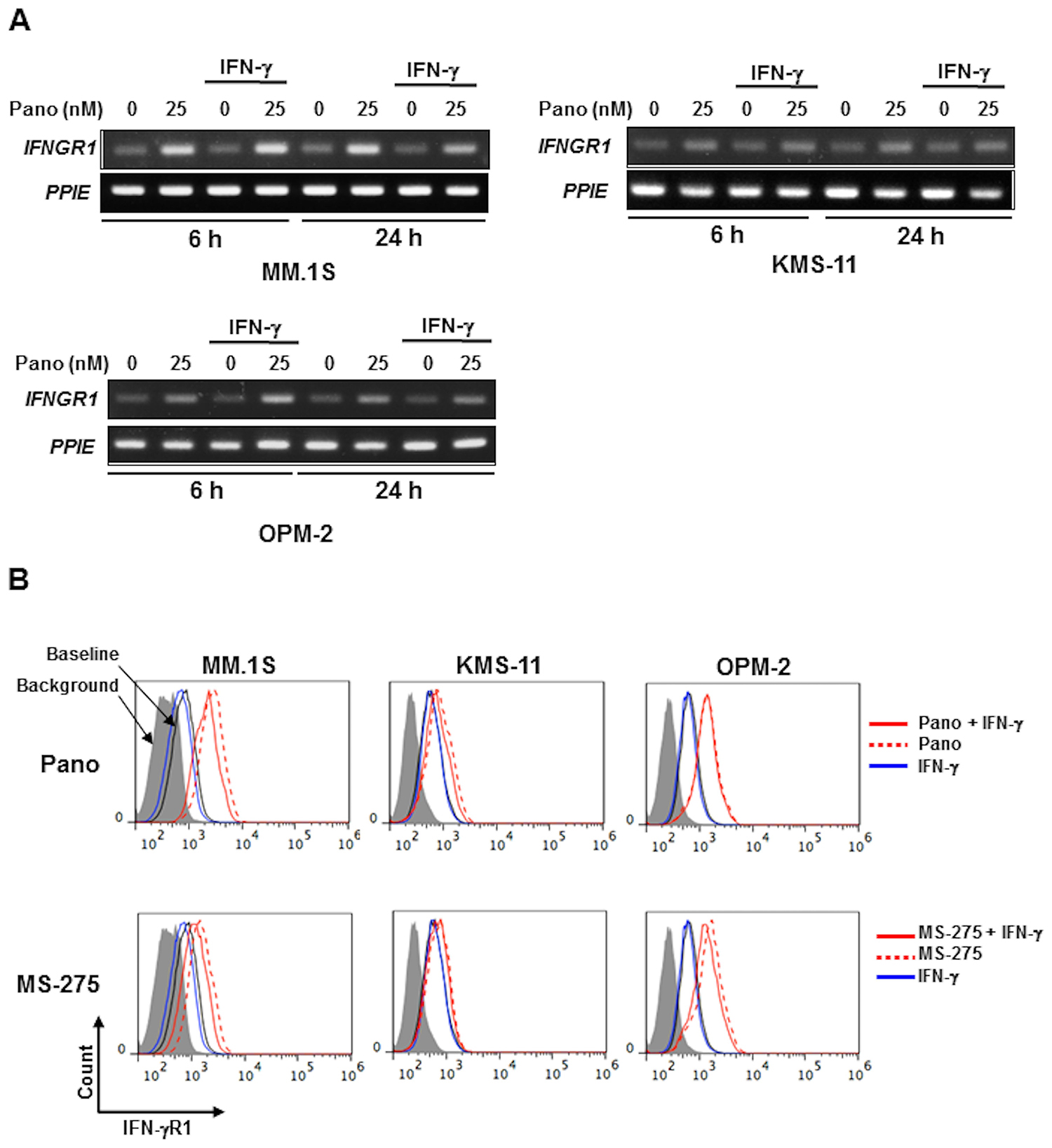 HDAC inhibition upregulates IFN-γR1 expression in MM cells.