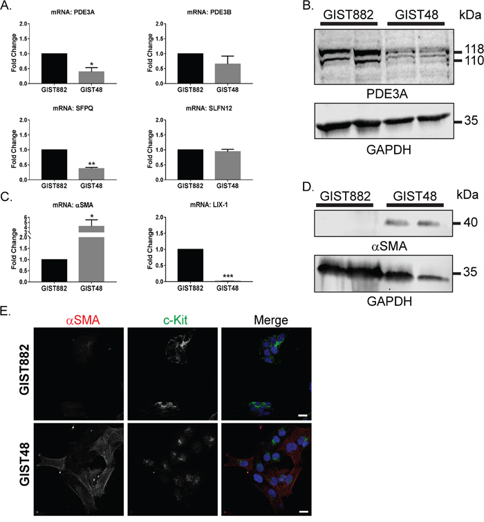 Differential expression of transcription factors and differentiation markers in GIST882 and GIST48 cells.