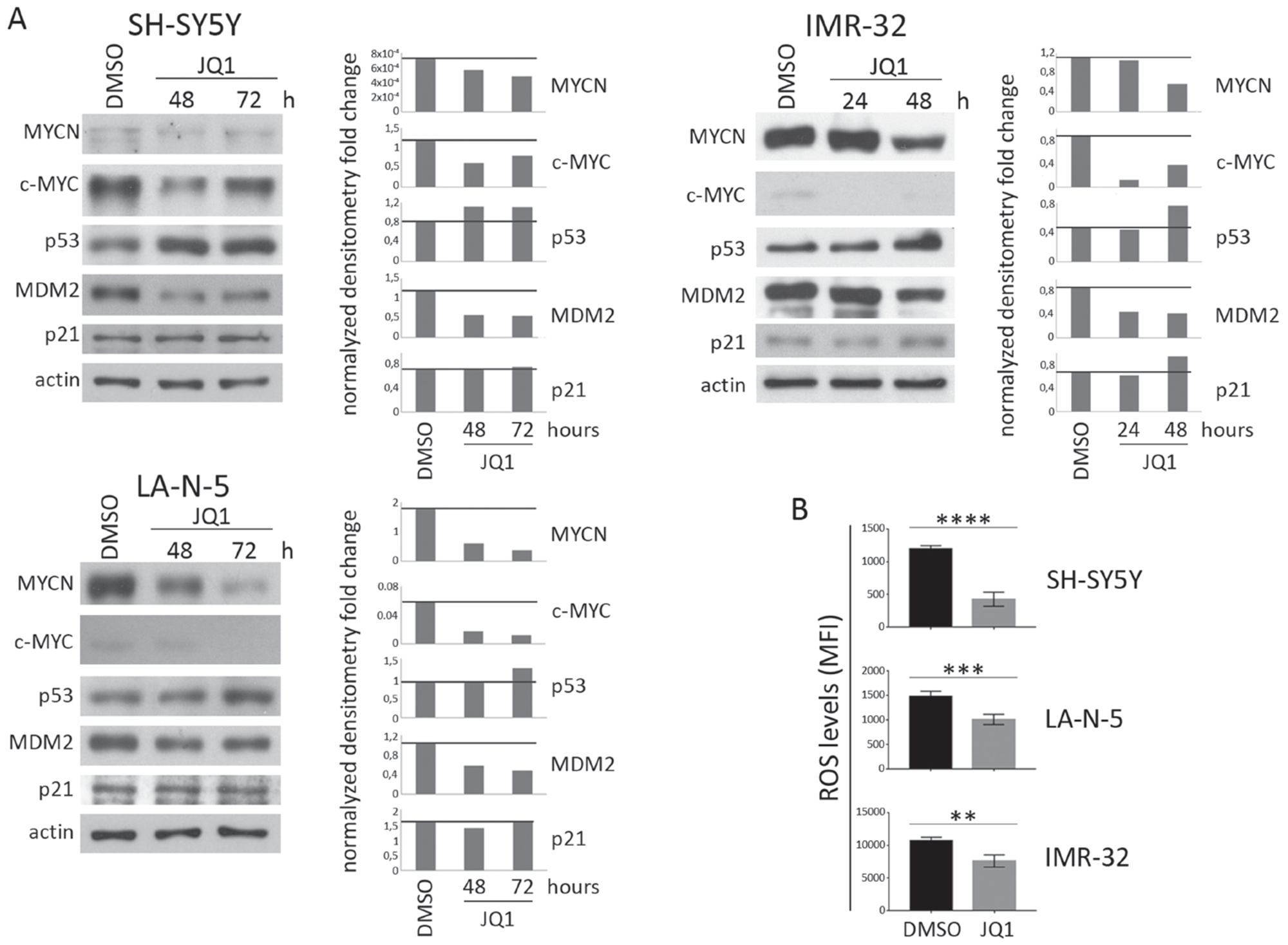 Expression levels of c-MYC, p53 and ROS production in JQ1-treated NB cell lines.
