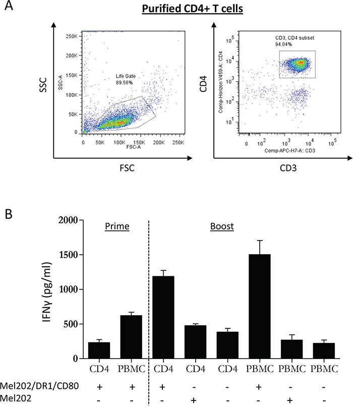 MHC II vaccines prepared from primary uveal melanoma cells prime and boost PBMC and purified CD4+ T cells.