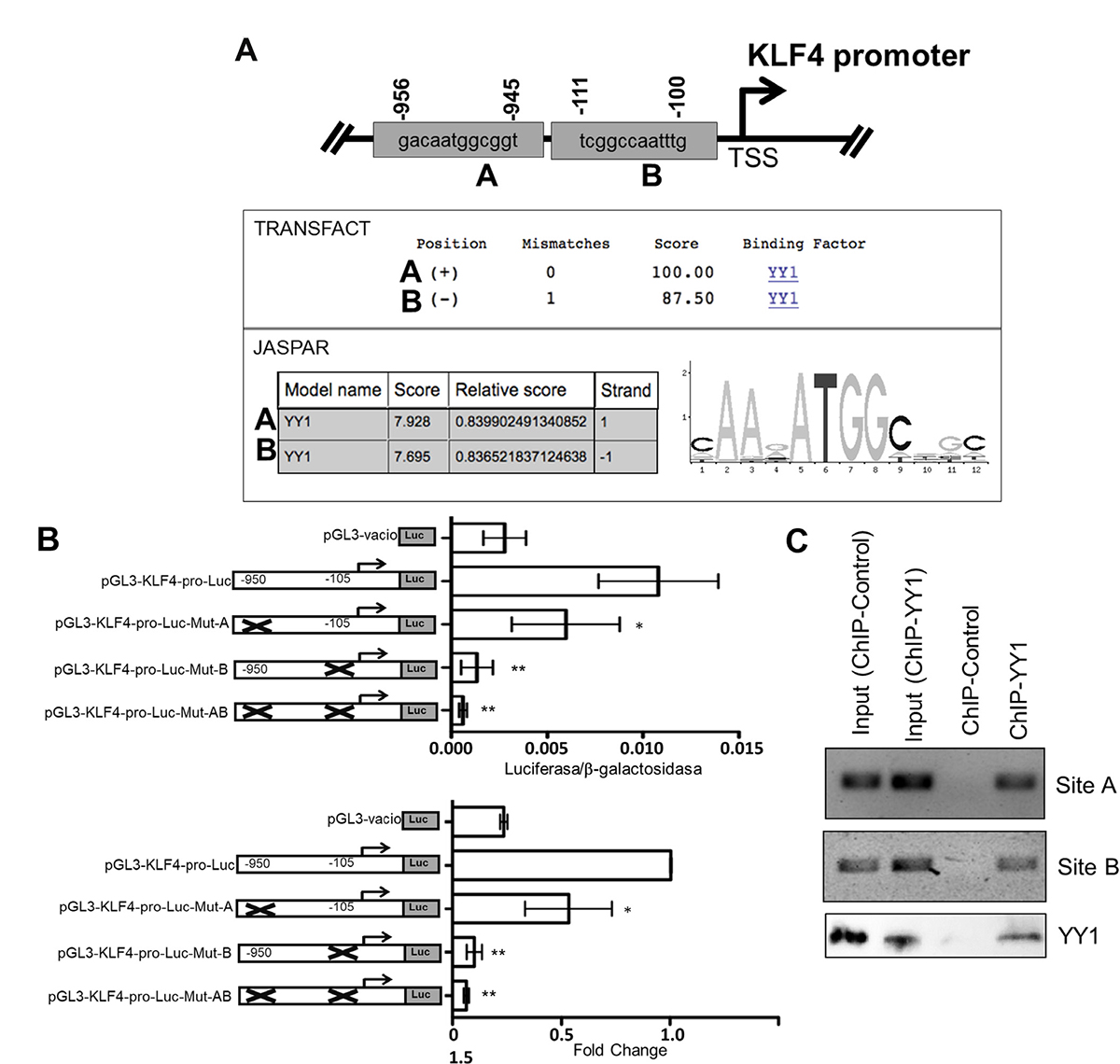 Bioinformatics analysis of the sequence of the promoter region of the KLF4 gene.