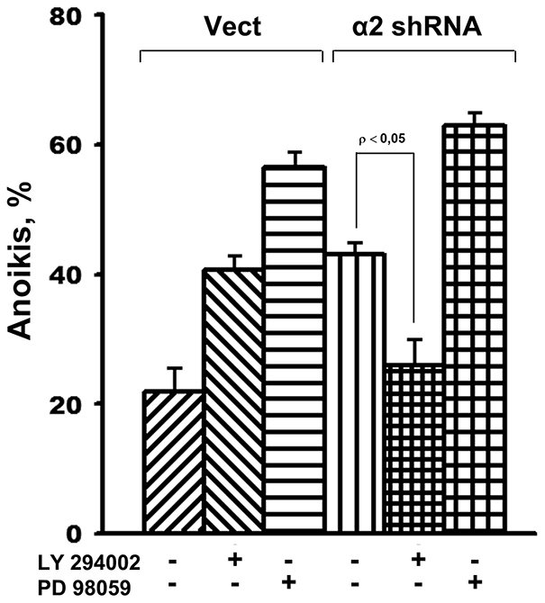 Inhibition of Akt kinase in SK-Mel-147 cells attenuates anoikis, caused by α2β1 knockdown.