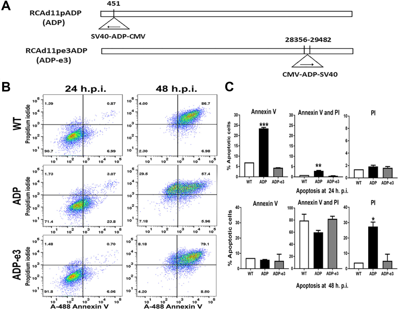 The RCAd11pADP virus induced significant apoptosis compared to that induced by RCAd11pE3ADP and Ad11pwt virus in PC3 cells.