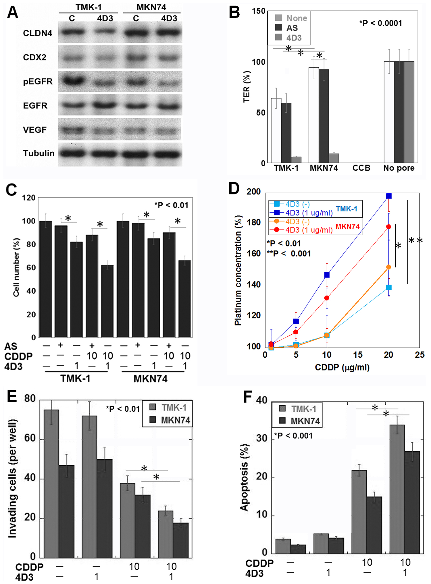 Effects induced by the 4D3 antibody in gastric cancer cells in vitro.