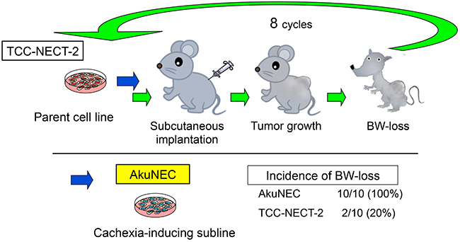 Isolation of subline with potential to cause BW-loss in tumor-bearing nu/nu mice.