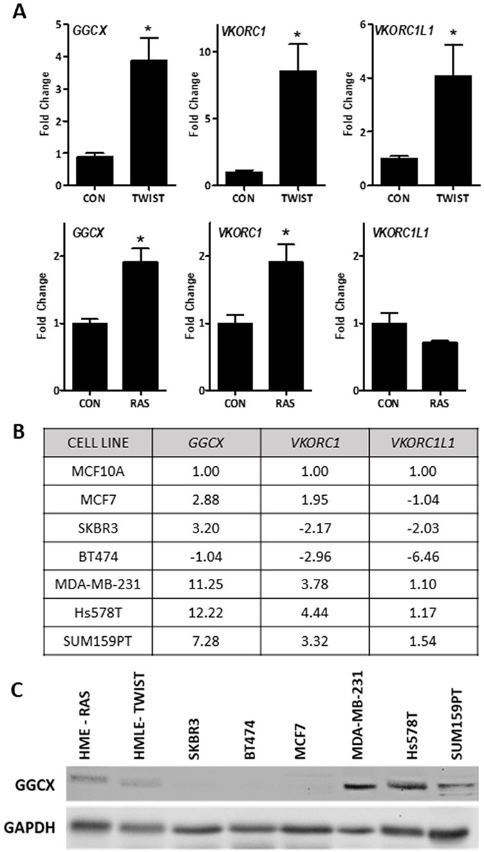 Basal expression of the vitamin K pathway in cellular models of breast cancer.