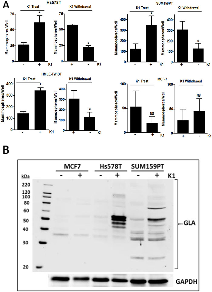 Effect of vitamin K1 treatment and withdrawal on mammosphere formation and GLA protein expression.