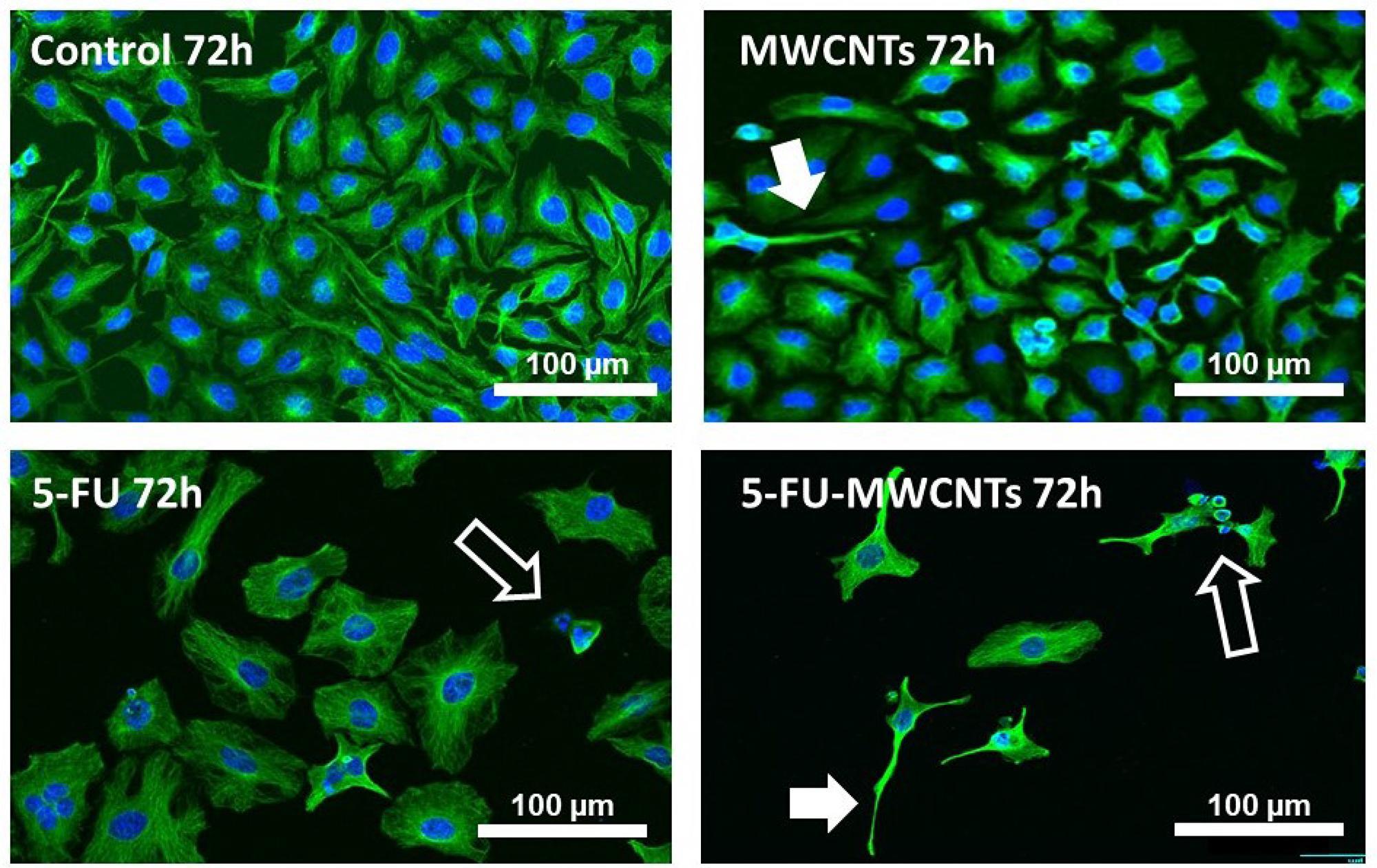 Anti-proliferative and cytotoxic effect of 5-FU-MWCNTs in vitro.
