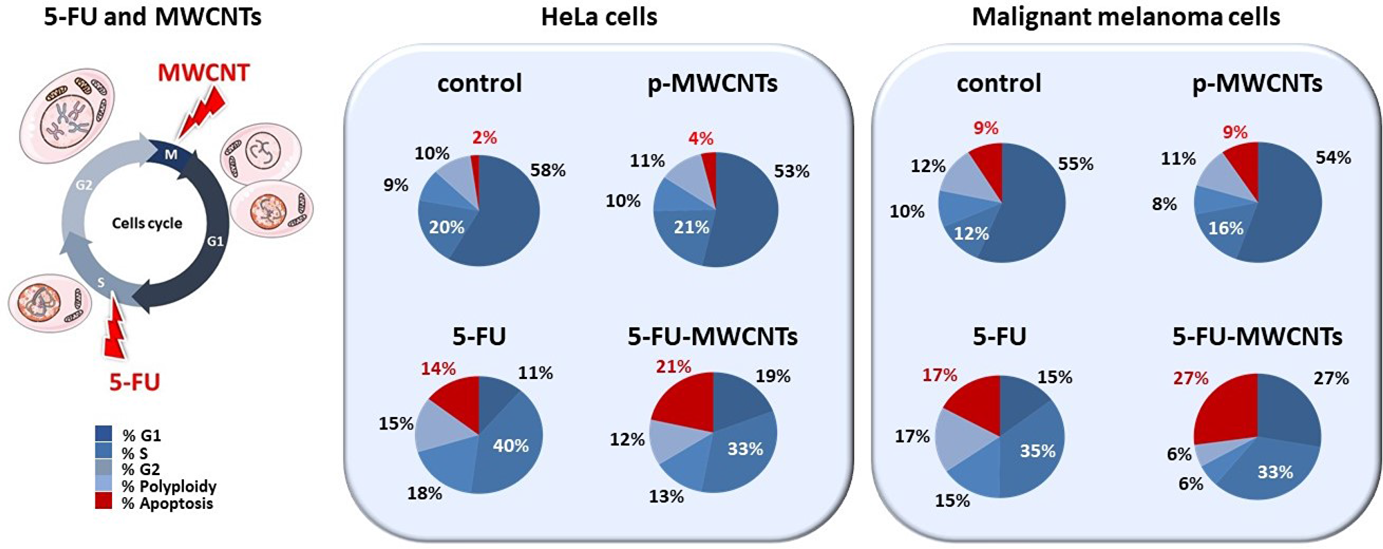 Quantification of the cytotoxic effect of 5-FU-MWCNTs compared to controls.