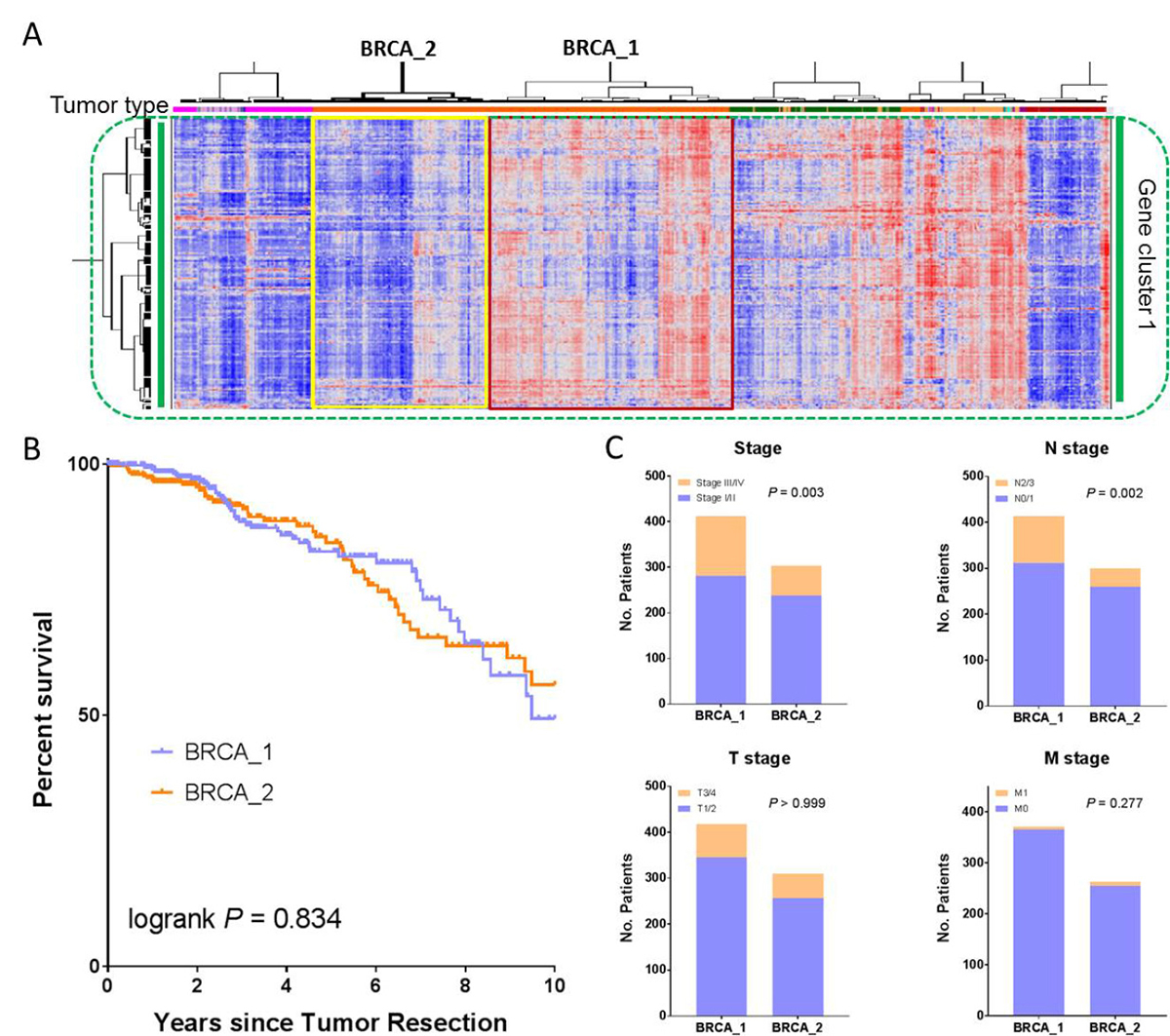 Clinicopathological correlation of BRCA patients with differentially expressed immune gene signatures.