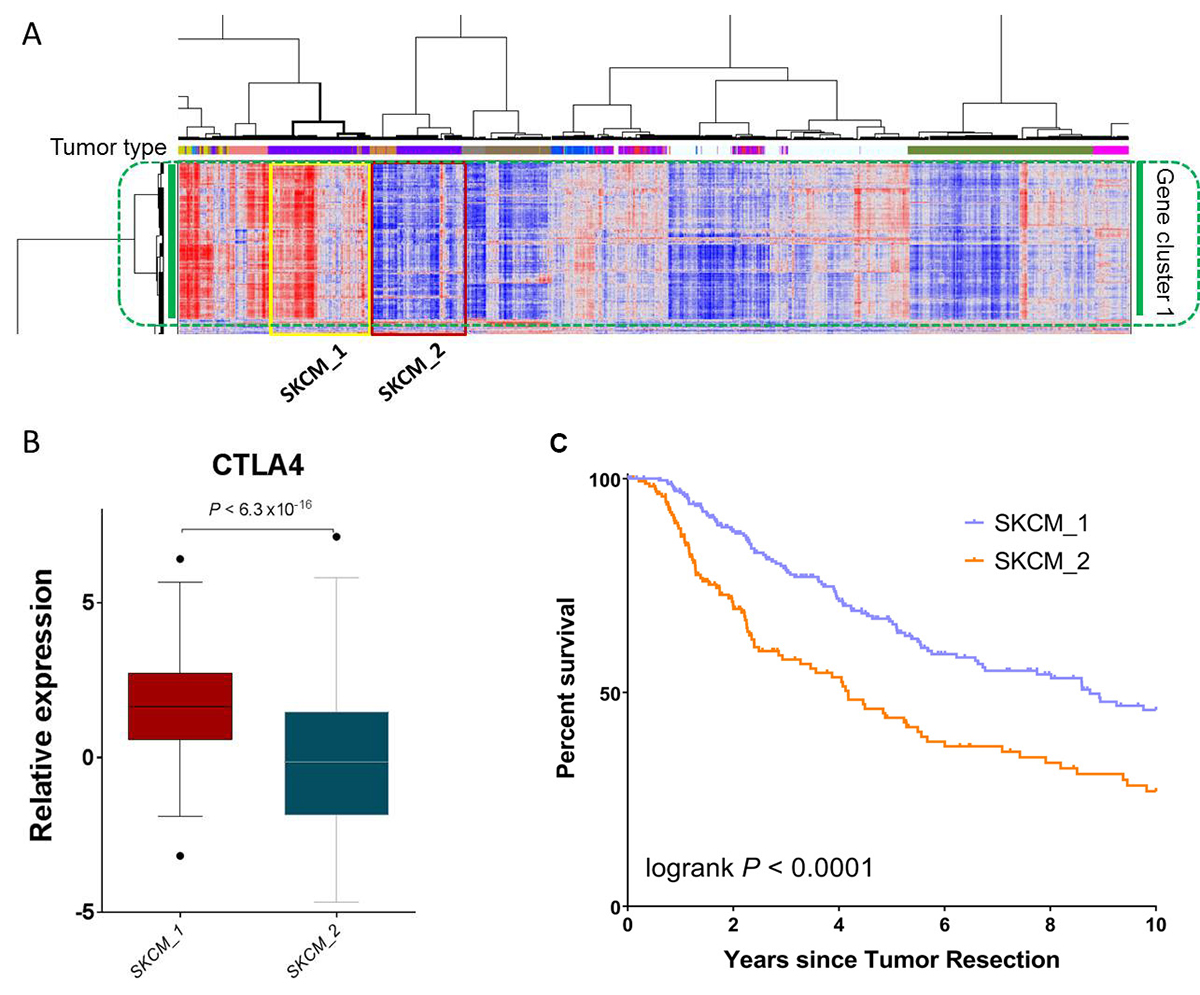 SKCM patients with differentially expressed immune gene signatures have significant survival differences.