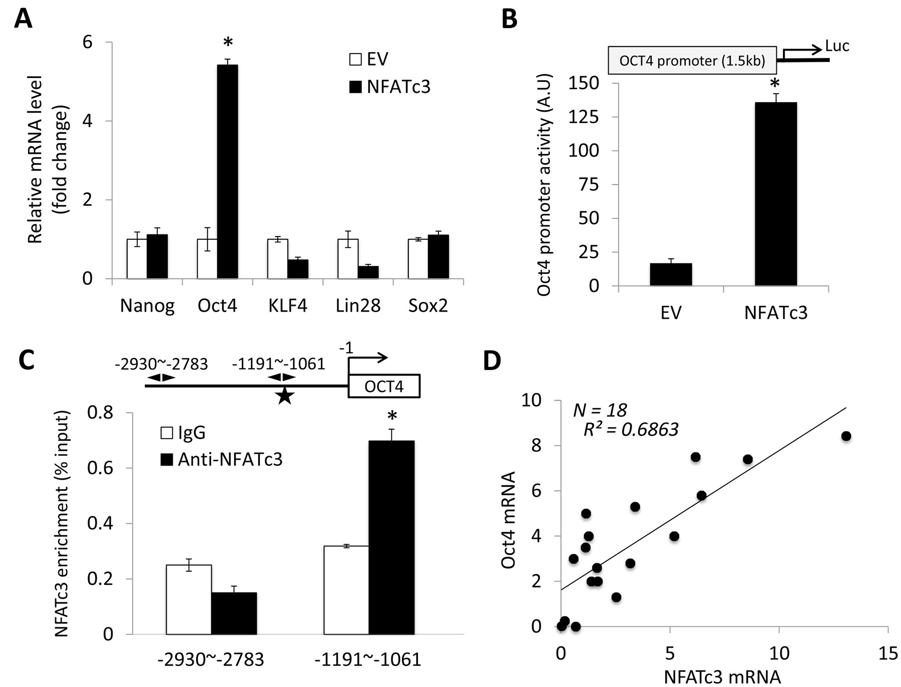 NFATc3 increases OCT4 expression by activating OCT4 promoter.