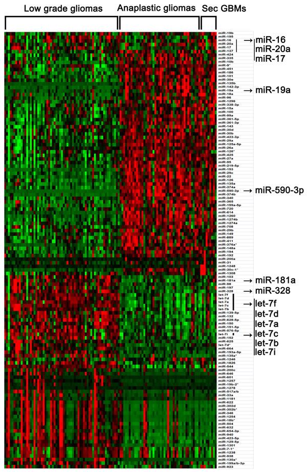 Differential expressed miRNAs among low grade, anaplastic gliomas and secondary glioblastomas (SAM: Fold change > 1.5, Q value < 1%).