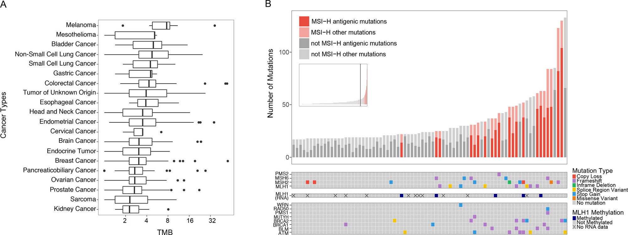 Survey of immunotherapy markers across diverse cancer types.
