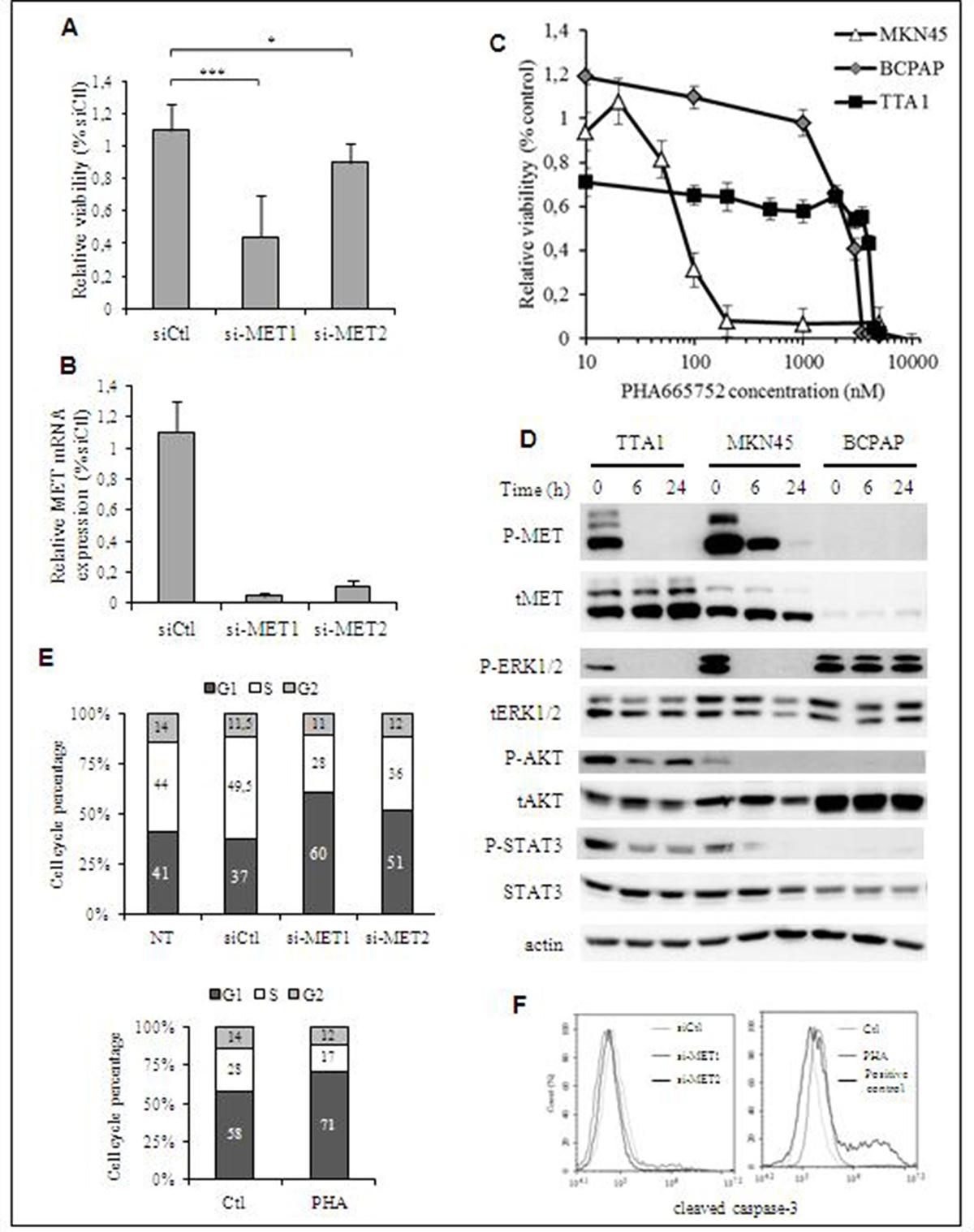 Effect of MET inactivation in TTA1 cells.