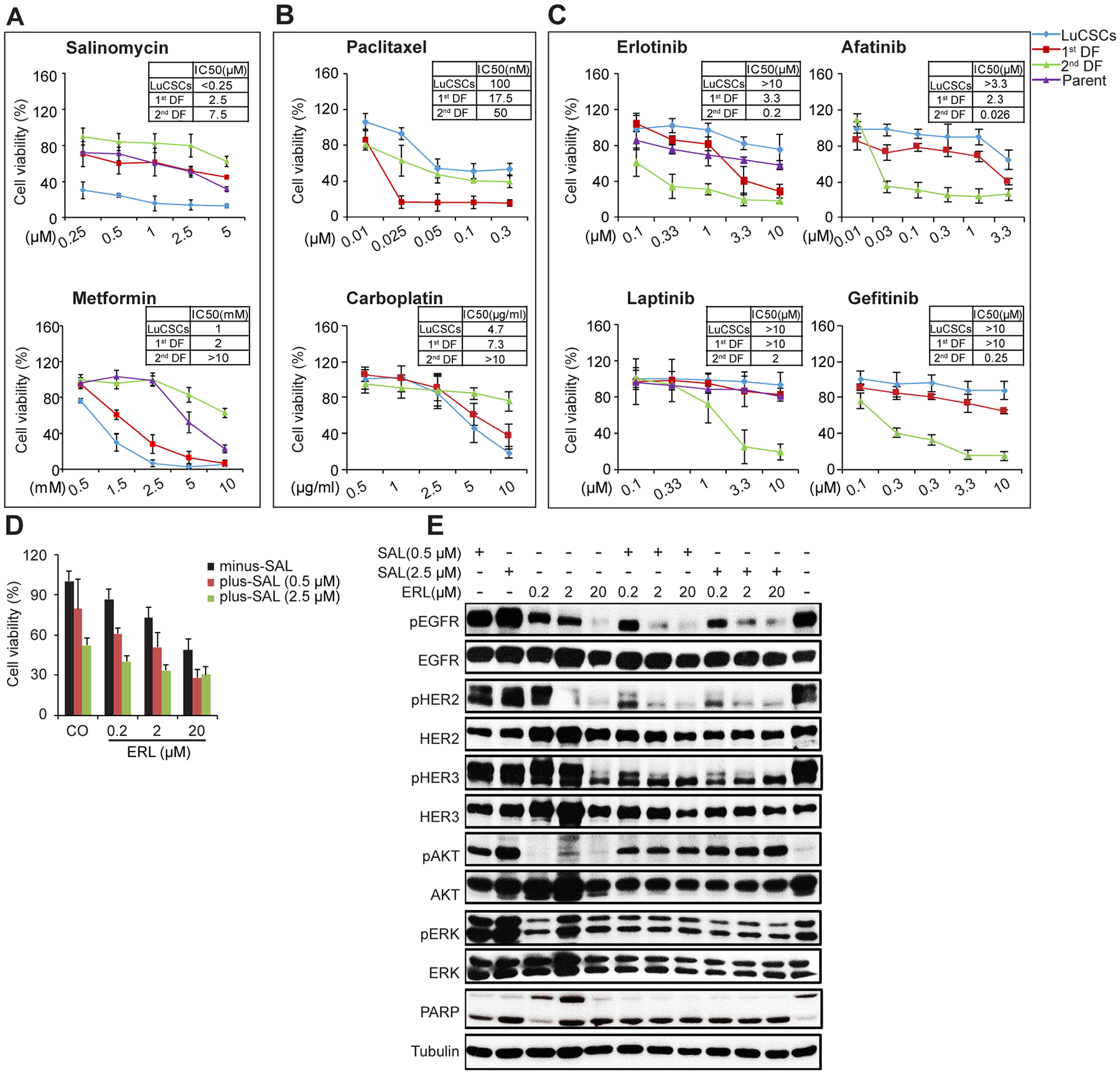 Sensitivity of LuCSCs and their progeny cells to cytotoxic drugs, EGFR-TKIs, Metformin and Salinomycin.
