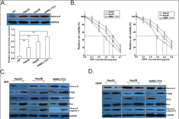 Effects of chemotherapy on the expression of Aurora-A and apoptosis-related proteins.