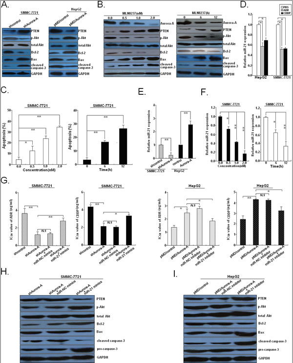 Aurora-A inhibits chemotherapy-induced apoptosis in HCC cells by upregulation of miR-21.