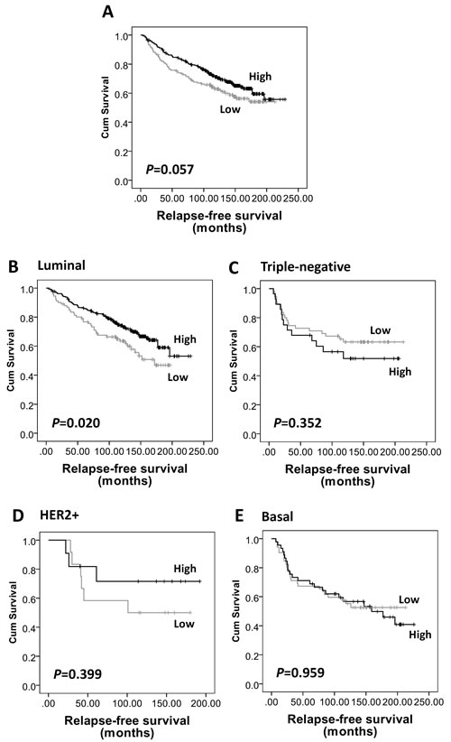Kaplan-Meier analysis of relapse-free survival showing the impact of AMPKα expression in the validation cohort of 609 patients with significance determined using the log-rank test.