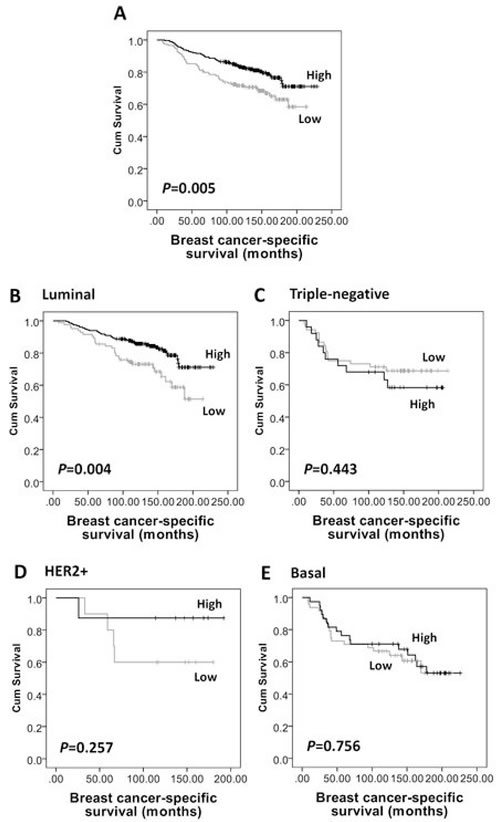 Kaplan-Meier analysis of breast cancer-specific survival showing the impact of AMPKα expression in the validation cohort of 609 patients with significance determined using the log-rank test.