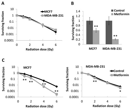Effects of metformin on survival and radioresponse of breast cancer cell lines.